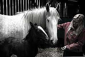 Lavorare con gli animali: corsi e opportunità ...